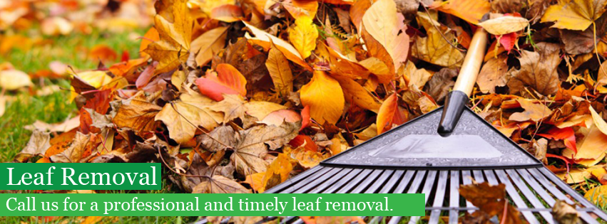 leafremoval